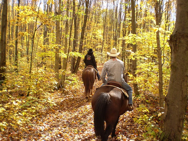Horseback riding in autumn